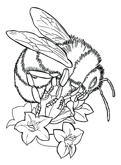 bumble.bee.jpg