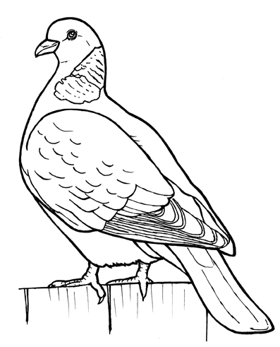 wood.pidgeon.jpg