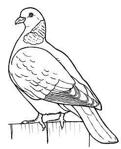 Colouring book drawings for the RSPB.