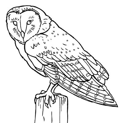 barn.owl.jpg