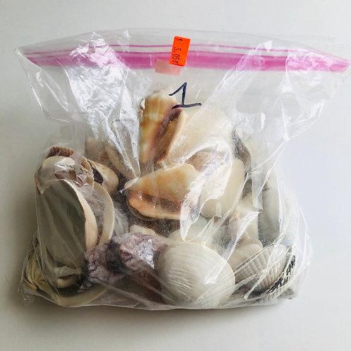 Large Bag of Sea Shells - #1