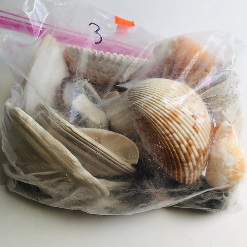 Large Bag of Sea Shells - #3