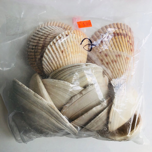 Large Bag of Sea Shells - #2