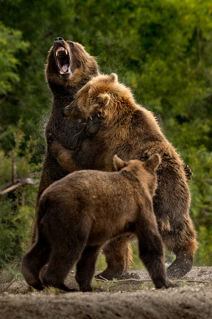 THE HUMAN BEARS, KAMCHATKA 2017 #4