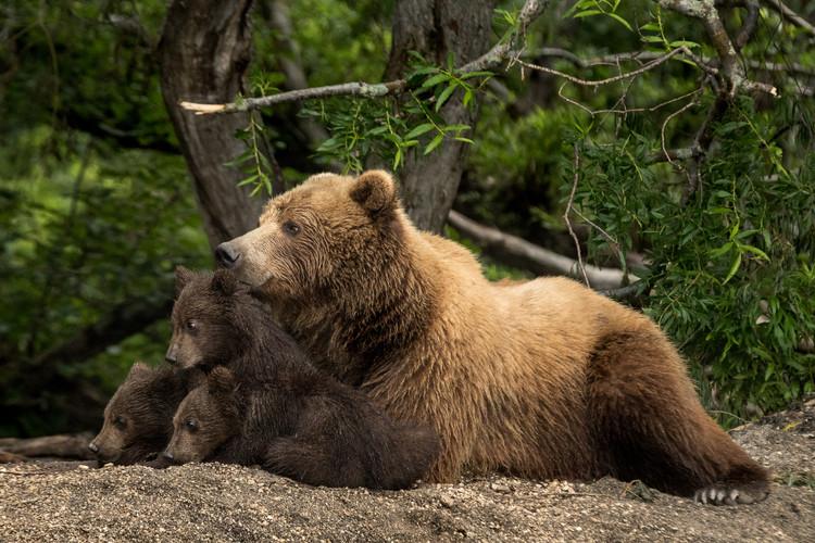THE HUMAN BEARS, KAMCHATKA 2017 #1