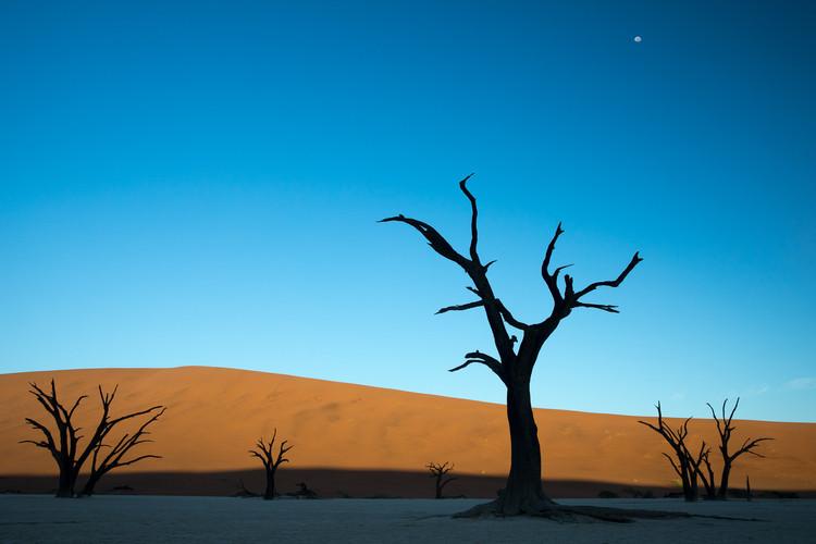 DEADVLEI, NAMIBIA 2017 #5