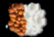argan_coconut_edit_cut.png
