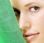 face_leaf1.jpg