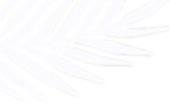 palmleaf transparent_white_flip.png