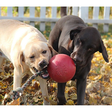 Romp-n-Roll Ball Jolly Pets Playing