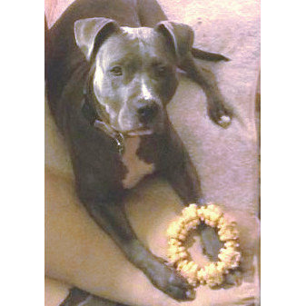 TEXTURED RING FOR BIG DOGS Nylabone®