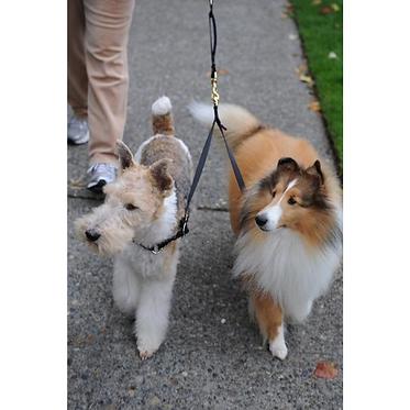 Mendota Braided Dog Coupler Multiple Dogs Walking