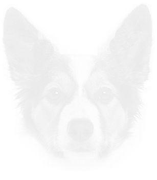 Dog 31.jpg