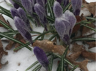 BE PRESENT: Did I notice the color of the crocuses or the eyes of the last person I spoke with?