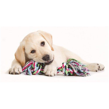 Multicolored Rope Bone Tug Toy Puppy