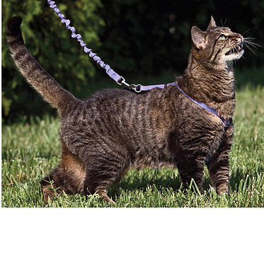 Come With Me Kitty Harness Bungee Leash Petsafe In Action