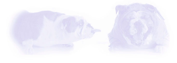 Dog 41.jpg
