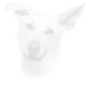 Dog 86.jpg