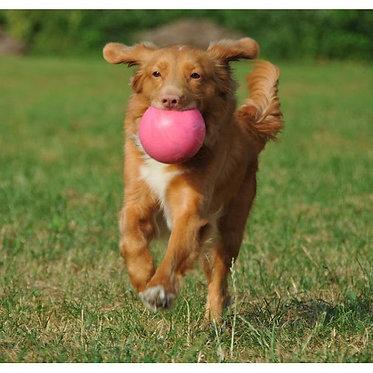 Bounce-n- Play Ball Jolly Pets