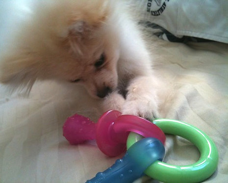 Nylabone Teething Pacifier Puppy