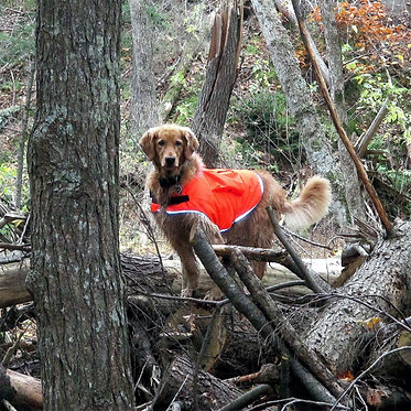 Mendota Canine Reflective Field Jacket in Action