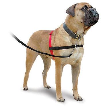 Halti Training Harness Large