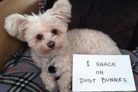 Dust Bunny Disposal Unit
