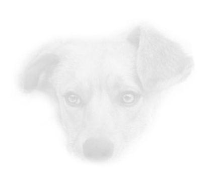 Dog 85.jpg
