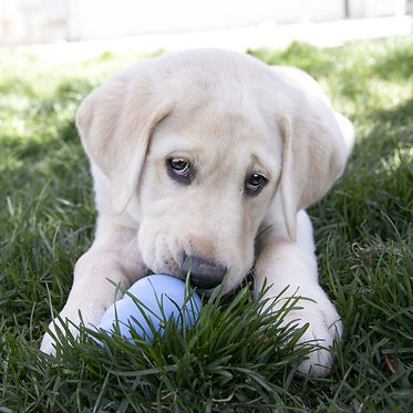 Puppy Kong Blue Play