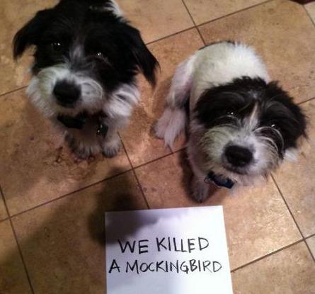 Conspired to Murder Mockingbird