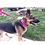 M1-K9 Big Dog Tactical Collar Pink With Lead
