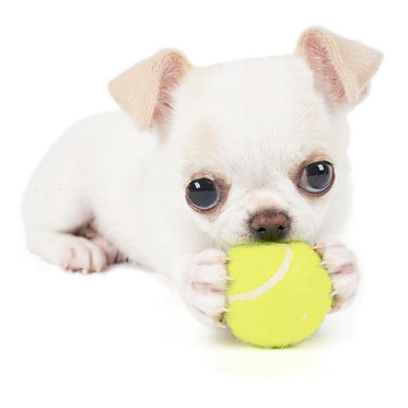 Air Kong Squeaker Ball X-small Small Dogs Puppies