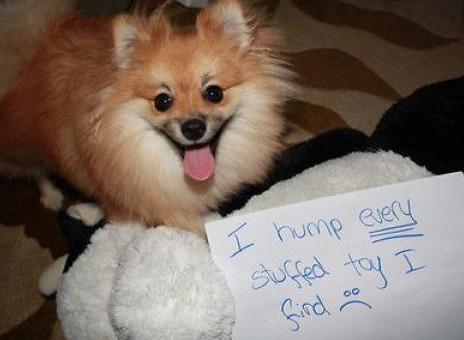 Pathological Stuffed Animal Humper