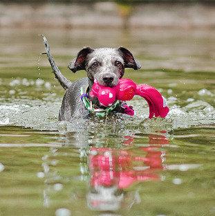 Kong Wubba Ballistic Friends Pink Hippo Water Play