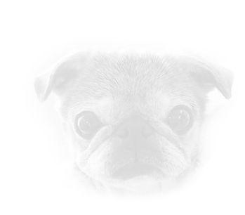 Dog 87.jpg