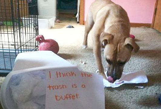 Unrepentant Trash Can Raider