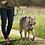 Halti Walking Harness Nylon in Action