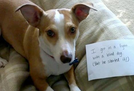 Blind Dog Bully
