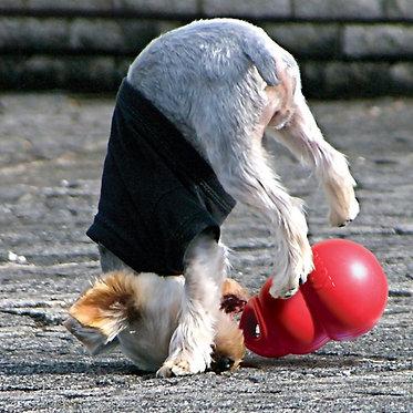 Kong Bounzer Dog Toy Fun
