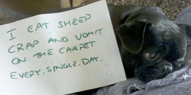 Sheep Poop Connoisseur