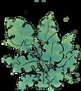 plantesanspot.png