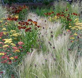 Prairie garden.jpg