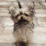 salon dog paisley.jpg