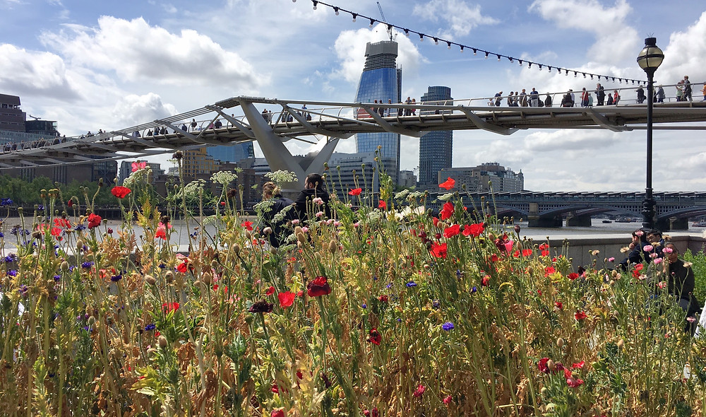 wildflowers and London buildings with blue sky