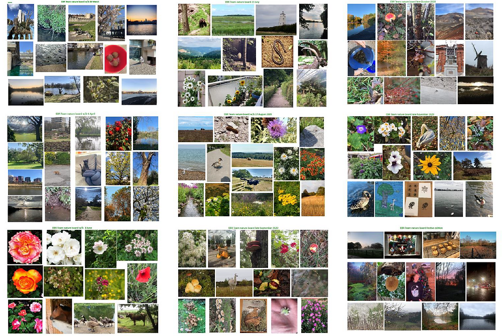 collage of photographs of nature