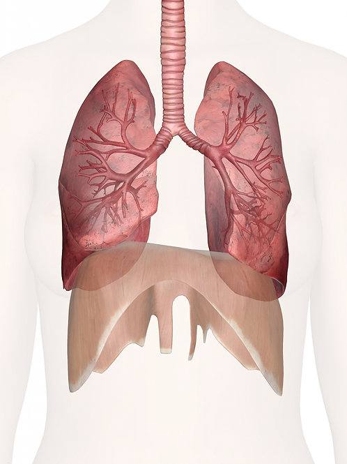 Respiratory System A&P Editable Powerpoint
