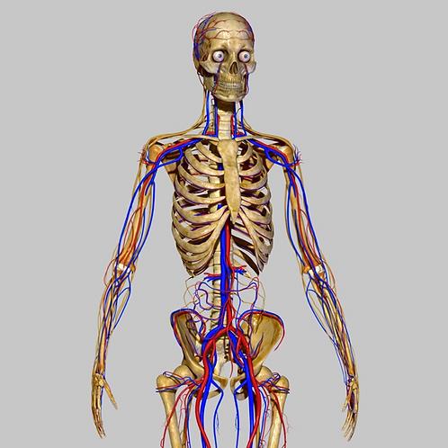 Anatomy & Physiology Editable Training Manual