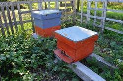 Kloosterbijen