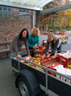Appels verzamelen voor appelpers