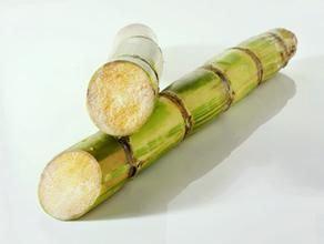 竹蔗/1條